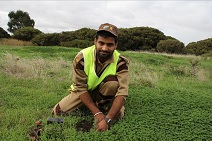 tree plantation in australia