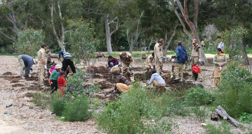 dera sacha sauda tree plantation australia