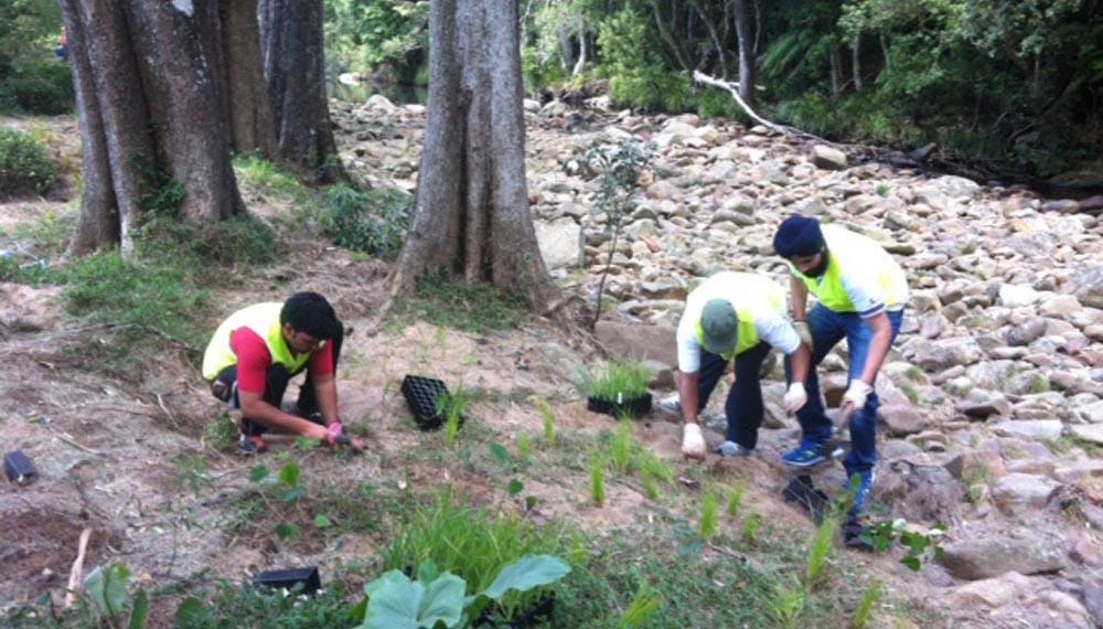 planting trees in australia