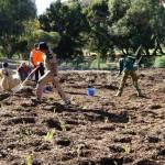 tree plantation perth australia