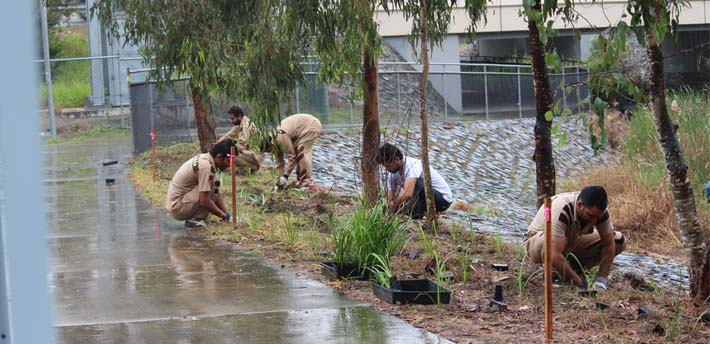 Tree Plantation in Brisbane